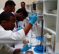 Trainee laboratory technicians conducting full honey analysis