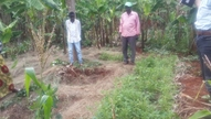 Using small pits for vegetables to face water stress, Burundi