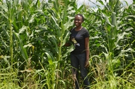 Me in a conservation agriculture maize field