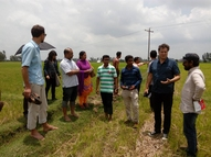 In a big rice field in Bogra, Bangladesh.