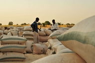 Aggregation point for smallholder maize farmers in Kaduna state, Nigeria