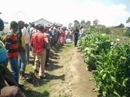 Farmer field day demonstration in Gilgil