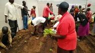 Tomato seedling transplanting in Solai