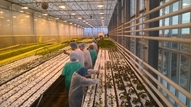 Visiting an innovative (urban) greenhouse
