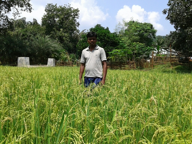 Short dureation Indigenous Paddy saver