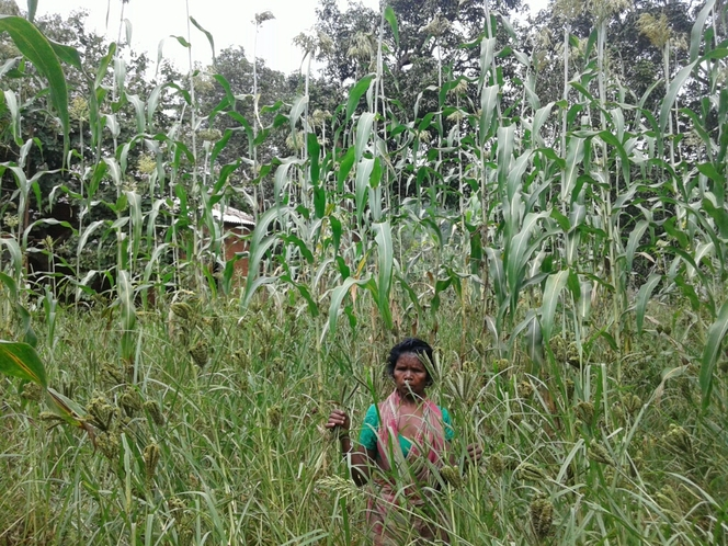 Income enhance through Millets mix farming