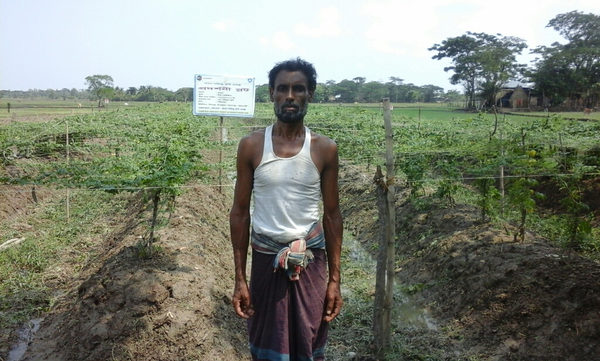 Vegetables cultivation at Sohidul's demo plot