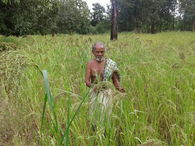 Revive Millets mix farming