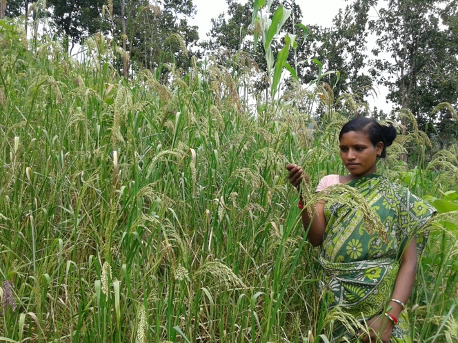Millets based bio-diverse framing
