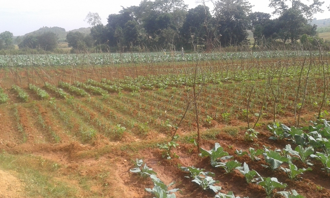 Vegetable Cultivation