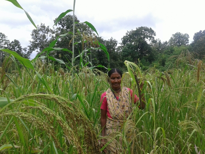 Income enhance through Millets mix cultivation