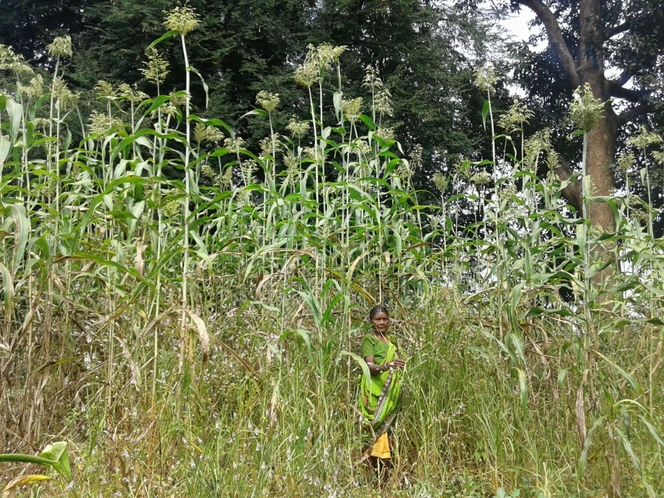 Ecological farming through millets .