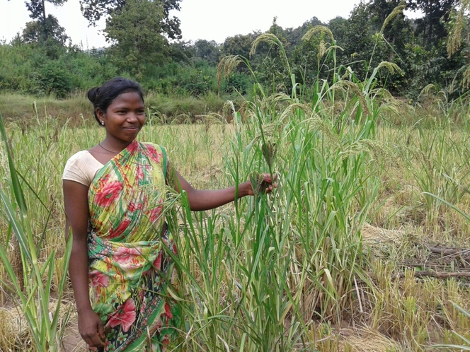 Ecological  millets mix farming