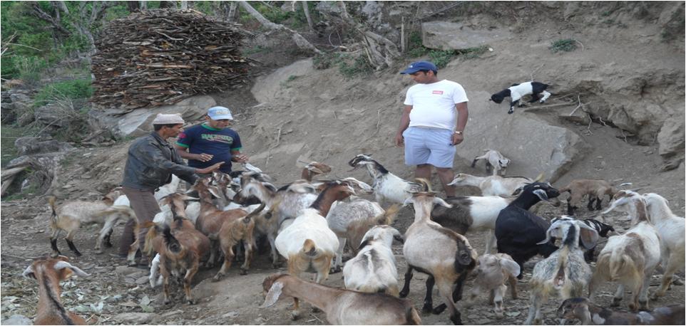 How do you start a goat farm?