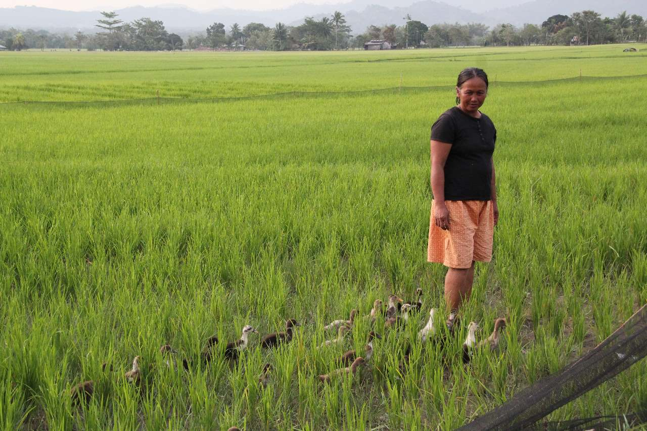 development of eco friendly rice farming Sustainable agriculture, institutional theory and resources, based view   security is uncertain, since the growth rate of the world`s rice production has  slowed.