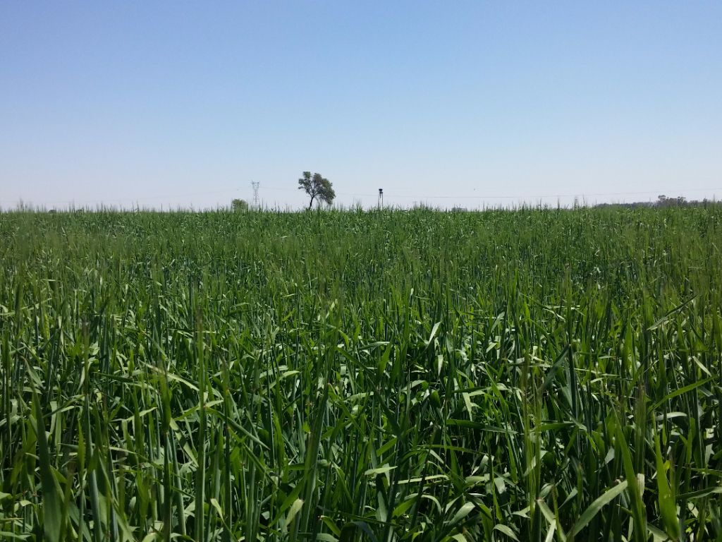 Barley Emerging Farmers Economic Development