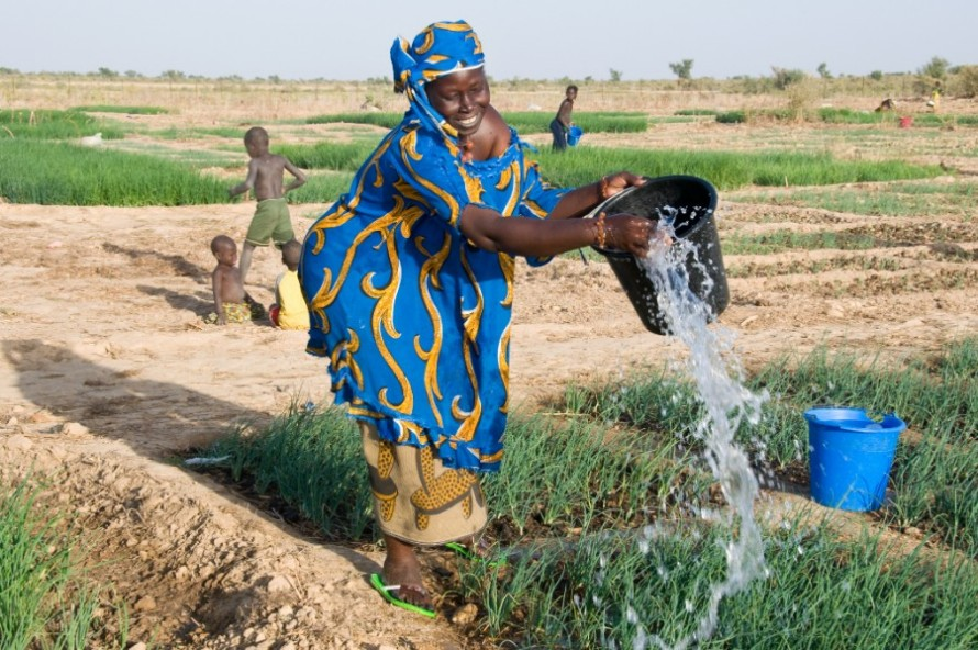Commercial Alliance for Smallholders in Horticulture, in Mali